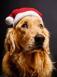 Image result for Christmas pics with dogs and dolphins
