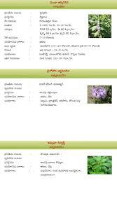 ayurvedam telugu magazine medicinal plants