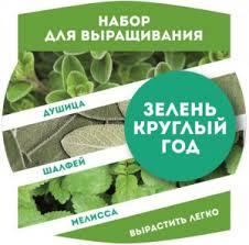 <b>Растение BontiLand Зелень круглый</b> год 412293 Душица ...