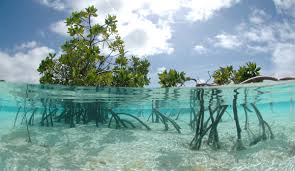 hutan mangrove dan manfaatnya