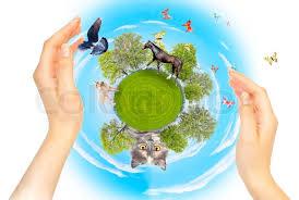 essay on conservation of nature  order essay
