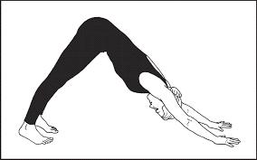 Image result for dog yoga pose