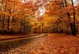 Image result for fall with maple leaf in canada