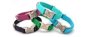 <b>Nylon</b> Webbing Collection – Flying <b>Dog Collars</b>