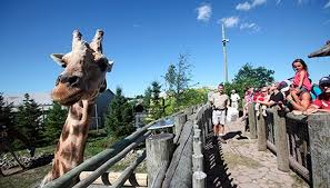 Résultats de recherche d'images pour «Zoo de Granby Amazoo»