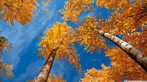 Preparing for Fall Equinox, 2012! Images?q=tbn:ANd9GcTU4Ap6_KmrIXFuwj2o4d_JZINfyv2w6dKLY95VfSgqDQlP6PX3dA