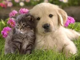 Картинки по запросу картинки про тварин