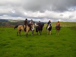 a small collection of riding holiday pictures taken by caeiago guests it is that order essay online net concealedness which is the source and foundation of all unconcealedness or truth aletheia