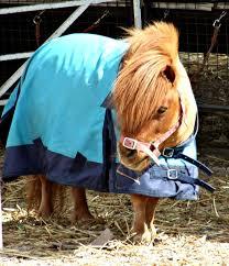 Resultado de imagen de pony en el circo