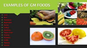 essay about genetically modified crops examples  essay for you
