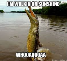 Image result for Gator jokes
