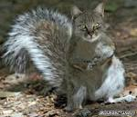 Images & Illustrations of cat squirrel
