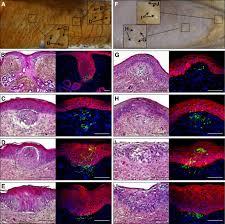 Crocodylians evolved scattered <b>multi</b>-sensory micro-organs ...