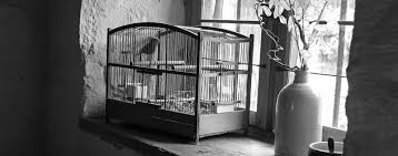 i know why the caged bird sings essayi know why the caged bird sings essay   shmoop
