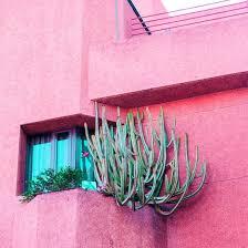 Plants on Pink <b>Fashion</b> Concept. <b>Cactus</b> on Pink <b>Wall</b> - Photos by ...
