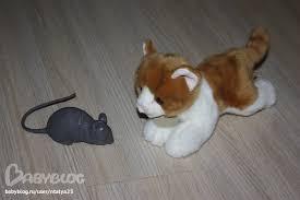 Картинки по запросу Картинка кошка мышку цап!