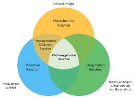 diagrams   venn diagramsample   photooxygenation  venn diagrams