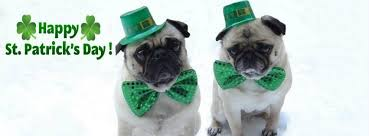 Image result for st patty dog