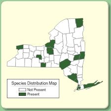 Pyrus communis - Species Page - NYFA: New York Flora Atlas