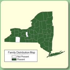 Ulmaceae - Family Page - NYFA: New York Flora Atlas - NYFA: New ...