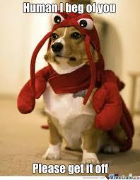 Crabby Corgi by hazzydog - Meme Center via Relatably.com