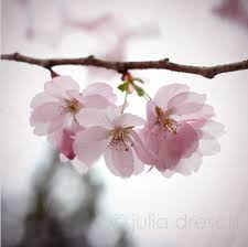 <b>Waiting</b> for the <b>Spring</b> to Come - Photodoto