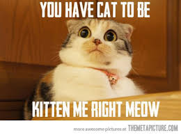 Image result for cat fun meme
