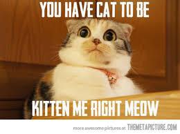 Image result for cat fun meme