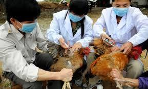 مخاوف وصول انفلونزا الطيور الجديدة