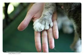 Картинки по запросу мечта о кошке
