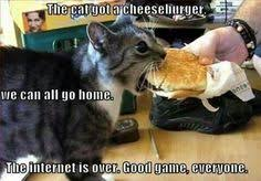 Cat Memes on Pinterest   Funny Cats, Meme and Funny Kittens via Relatably.com