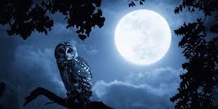 Arti Mimpi melihat bulan purnama