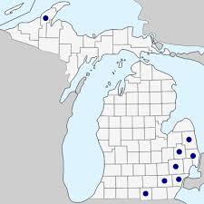 Crataegus monogyna - Michigan Flora