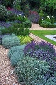 Сеслерия черноцветковая (саженец) | флориум | Pinterest | Grass ...