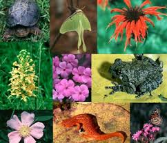 Diversity in Living Organisms,Classification of living beings ,