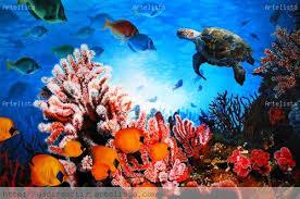 Resultado de imagen de fotos de arrecife