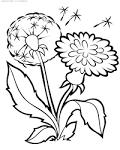 Раскраска цветов детям