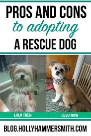 the pros cons of adopting a rescue dog holly hammersmith s blog pros and cons of adopting a rescue dog