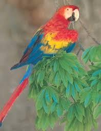 <b>parrot</b> | Description, Types, & Facts | Britannica