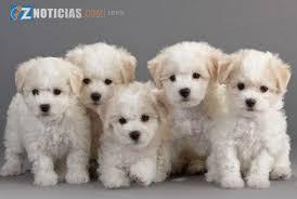 Resultado de imagen para imagenes de perros