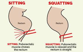 「squatty potty」の画像検索結果