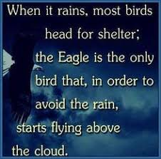 Image result for PICTURE OF EAGLES THAT SOAR
