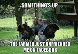The Best Collection of Funny Thanksgiving Memes and Pictures! via Relatably.com