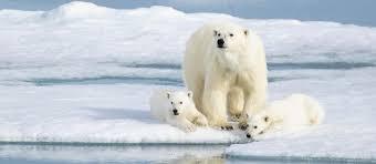 Svalbard in <b>Spring</b>: Polar Bears, <b>Arctic Light</b>, and Epic Ice