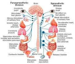 nervous system  endocrine system and trauma on pinterestmultiple system atrophy   physiopedia  universal access to physiotherapy knowledge