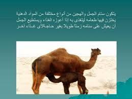 معلومات عن حيوانات images?q=tbn:ANd9GcT