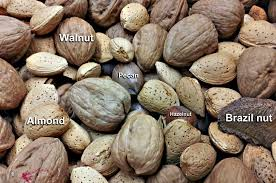 Fruit à coque
