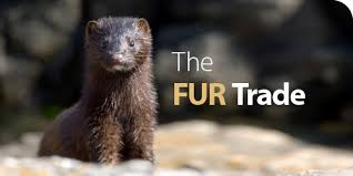 「the fur trade」の画像検索結果