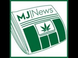 Image result for mj news network