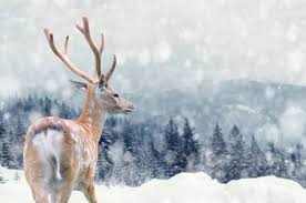 <b>Christmas Deer</b> Stock Photos And Images - 123RF